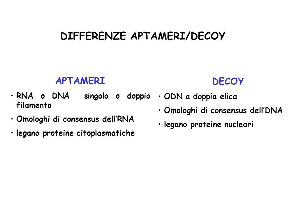 DIFFERENZE APTAMERI/DECOY APTAMERI RNA o DNA singolo o doppio filamento Omologhi di consensus dellRNA legano proteine citoplasmatiche DECOY ODN a dopp