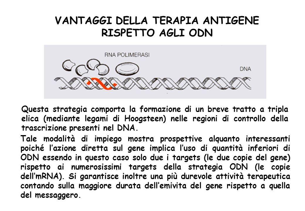 VANTAGGI DELLA TERAPIA ANTIGENE RISPETTO AGLI ODN Tale modalità di impiego mostra prospettive alquanto interessanti poiché lazione diretta sul gene im