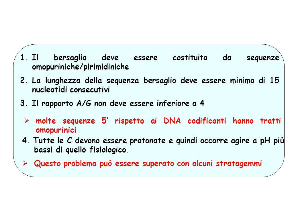 PROBLEMATICHE DELLA TERAPIA ANTI-GENE 1.Il bersaglio deve essere costituito da sequenze omopuriniche/pirimidiniche 2.La lunghezza della sequenza bersa