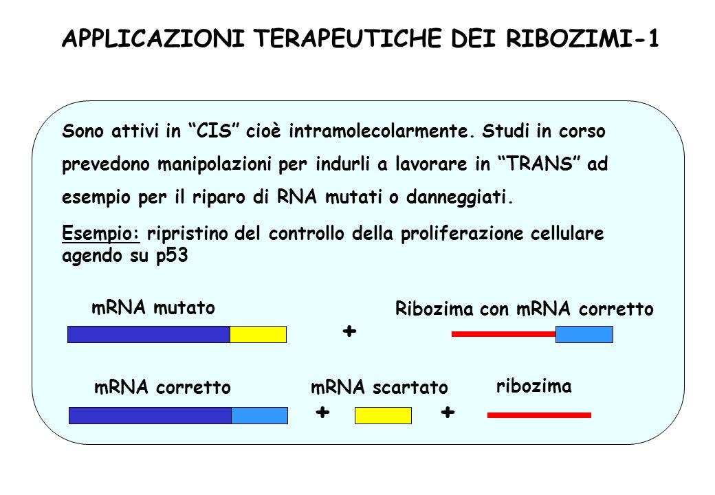 APPLICAZIONI TERAPEUTICHE DEI RIBOZIMI-1 Ribozima con mRNA corretto Sono attivi in CIS cioè intramolecolarmente. Studi in corso prevedono manipolazion