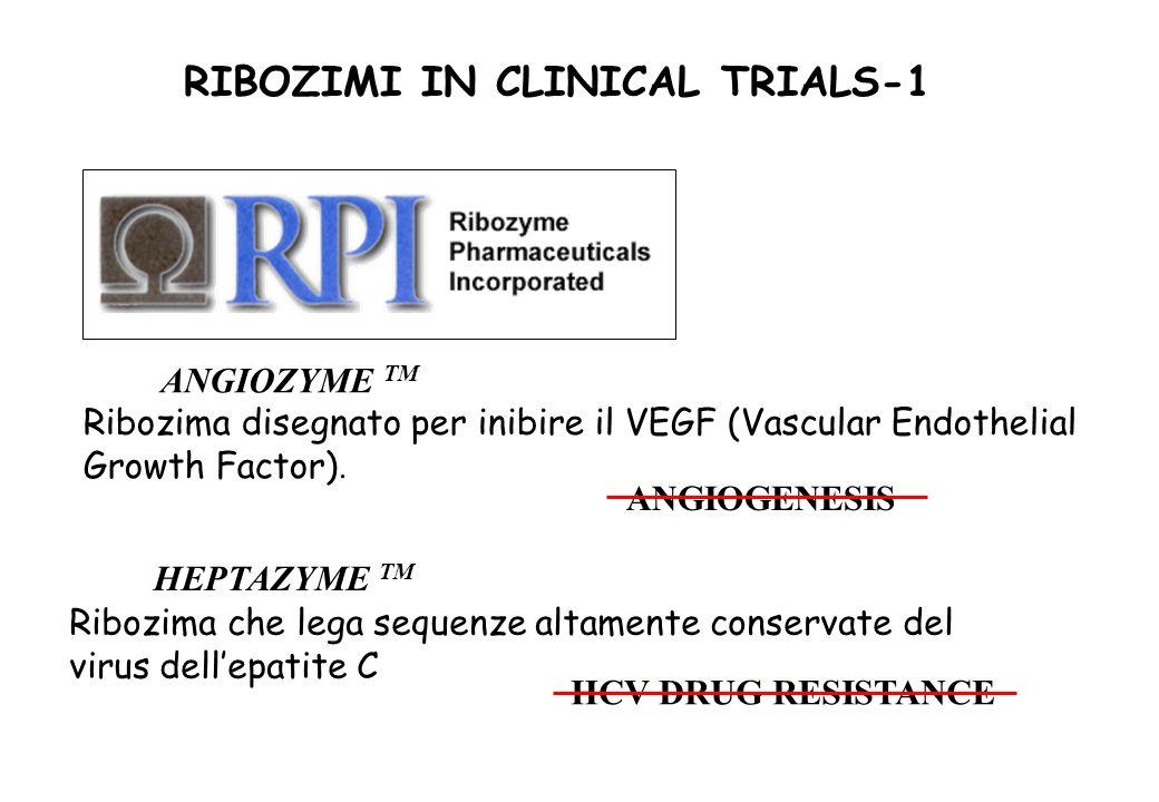ANGIOZYME TM HEPTAZYME TM Ribozima disegnato per inibire il VEGF (Vascular Endothelial Growth Factor). ANGIOGENESIS Ribozima che lega sequenze altamen