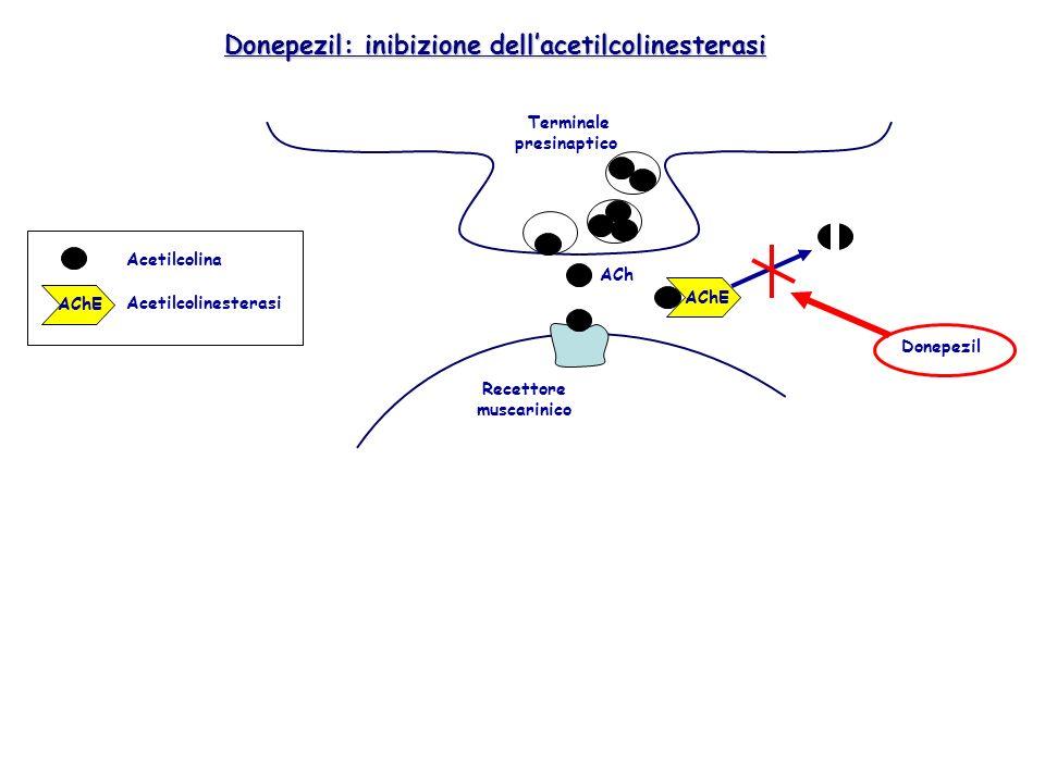 AChE Terminale presinaptico ACh Recettore muscarinico Donepezil Donepezil: inibizione dellacetilcolinesterasi AChE Acetilcolina Acetilcolinesterasi