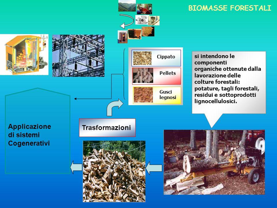 Cippato si intendono le componenti organiche ottenute dalla lavorazione delle colture forestali: potature, tagli forestali, residui e sottoprodotti lignocellulosici.