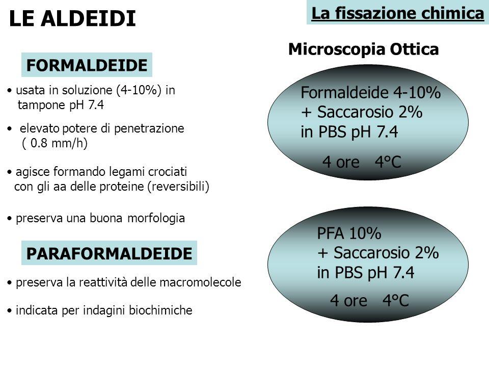 La fissazione chimica LE ALDEIDI FORMALDEIDE usata in soluzione (4-10%) in tampone pH 7.4 elevato potere di penetrazione ( 0.8 mm/h) agisce formando l