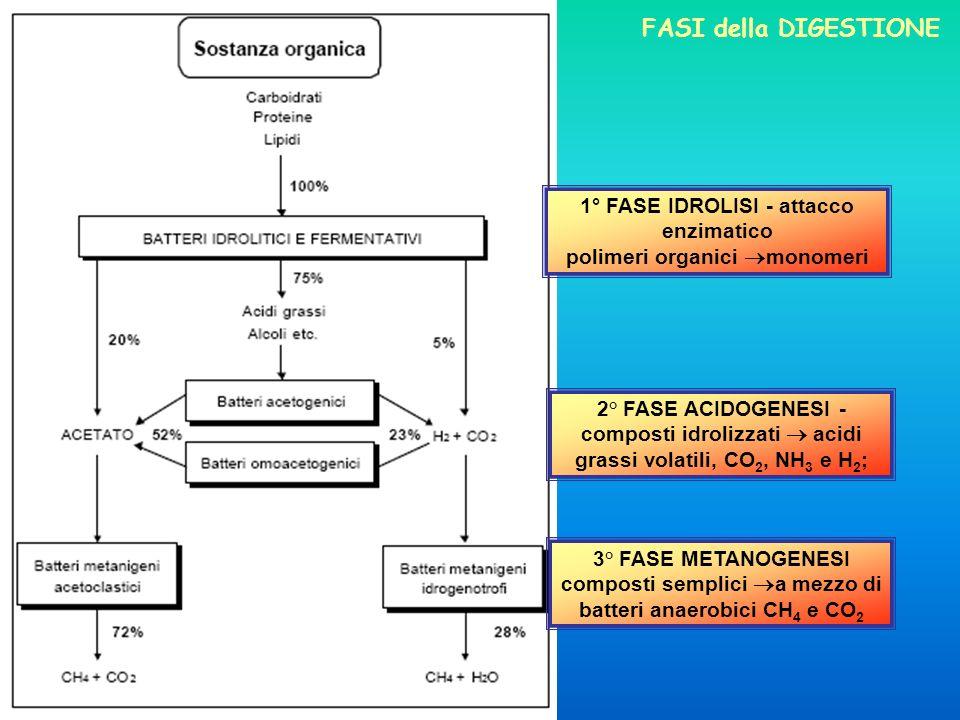 1° FASE IDROLISI - attacco enzimatico polimeri organici monomeri 2° FASE ACIDOGENESI - composti idrolizzati acidi grassi volatili, CO 2, NH 3 e H 2 ;