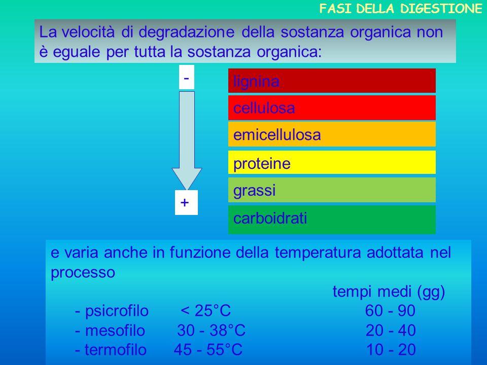 cellulosa emicellulosa proteine grassi carboidrati - + La velocità di degradazione della sostanza organica non è eguale per tutta la sostanza organica