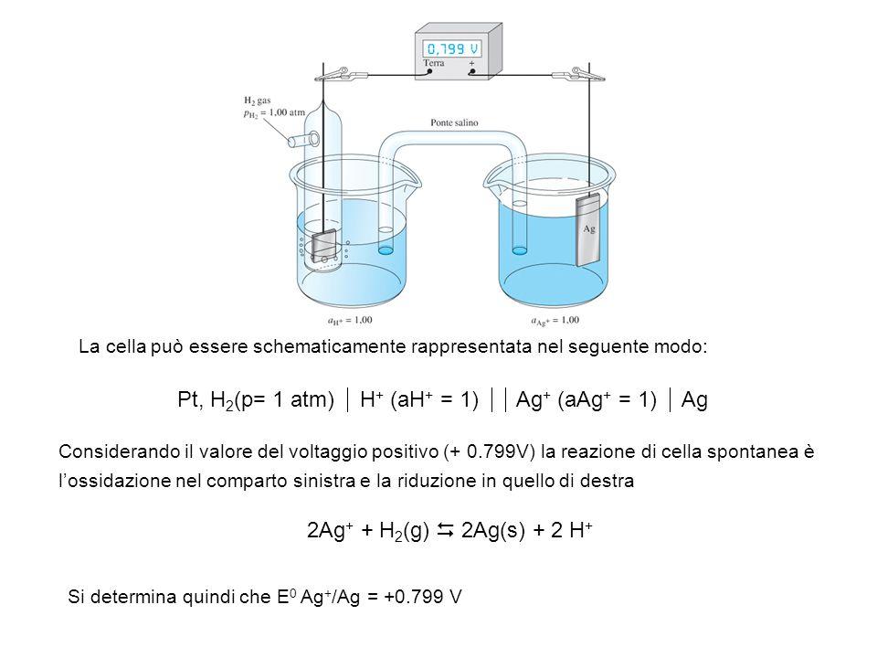 La cella può essere schematicamente rappresentata nel seguente modo: Pt, H 2 (p= 1 atm) H + (aH + = 1) Ag + (aAg + = 1) Ag Considerando il valore del