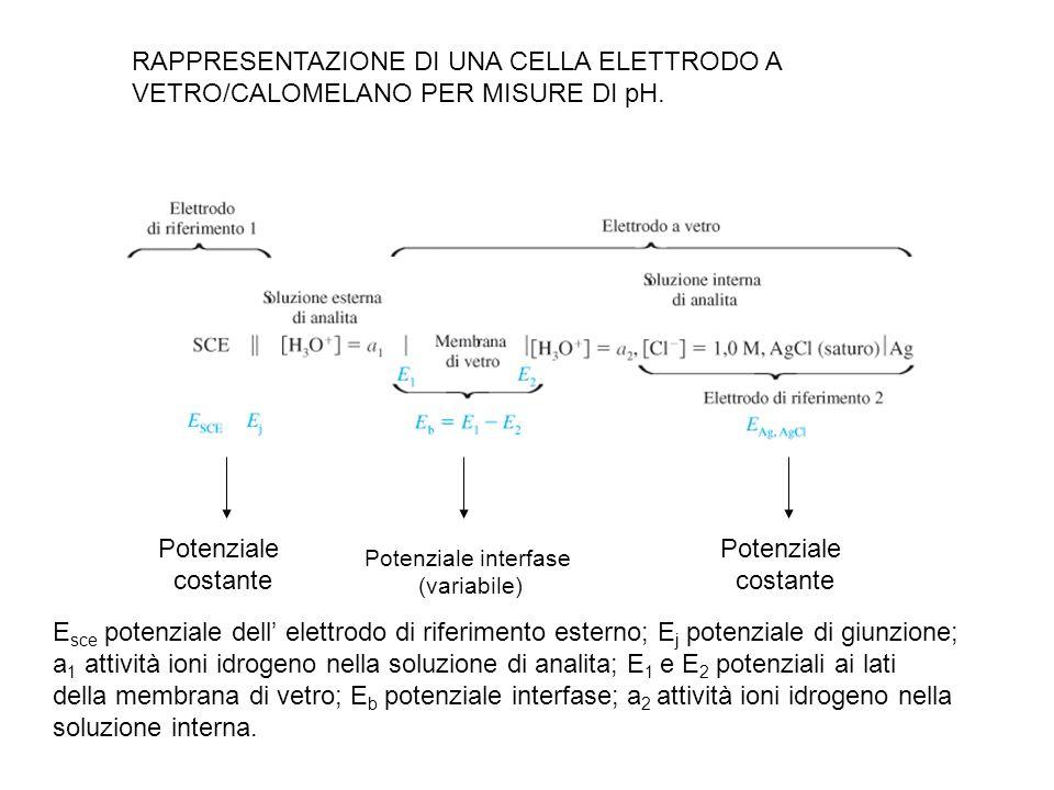 Potenziale interfase (variabile) Potenziale costante Potenziale costante RAPPRESENTAZIONE DI UNA CELLA ELETTRODO A VETRO/CALOMELANO PER MISURE DI pH.