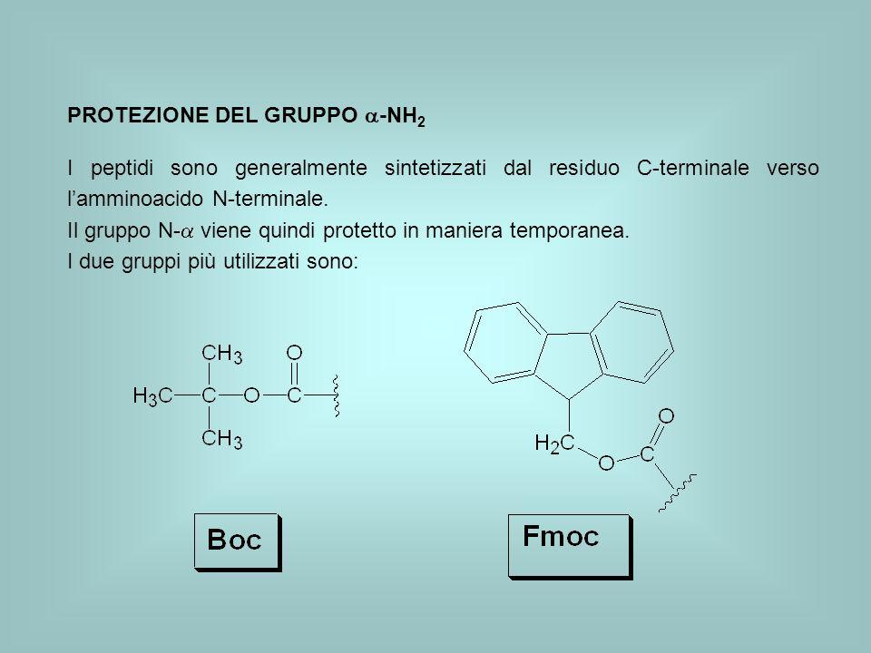 PROTEZIONE DEL GRUPPO -NH 2 I peptidi sono generalmente sintetizzati dal residuo C-terminale verso lamminoacido N-terminale. Il gruppo N- viene quindi