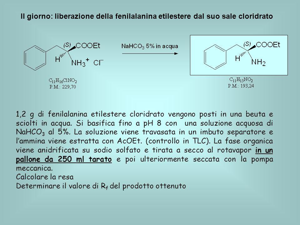 II giorno: liberazione della fenilalanina etilestere dal suo sale cloridrato 1,2 g di fenilalanina etilestere cloridrato vengono posti in una beuta e sciolti in acqua.