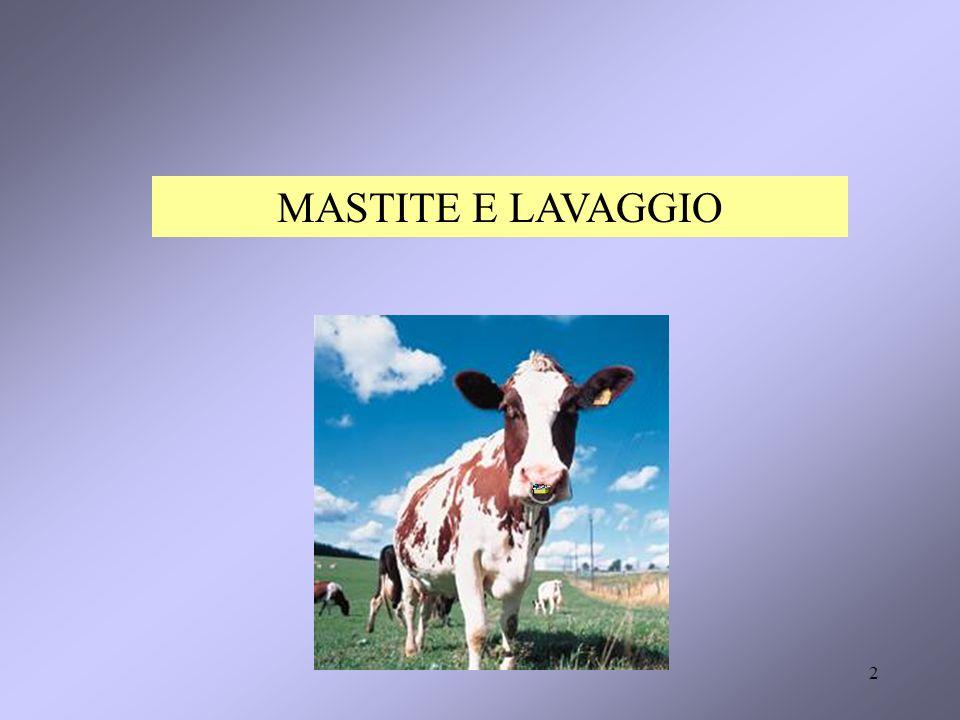 2 MASTITE E LAVAGGIO