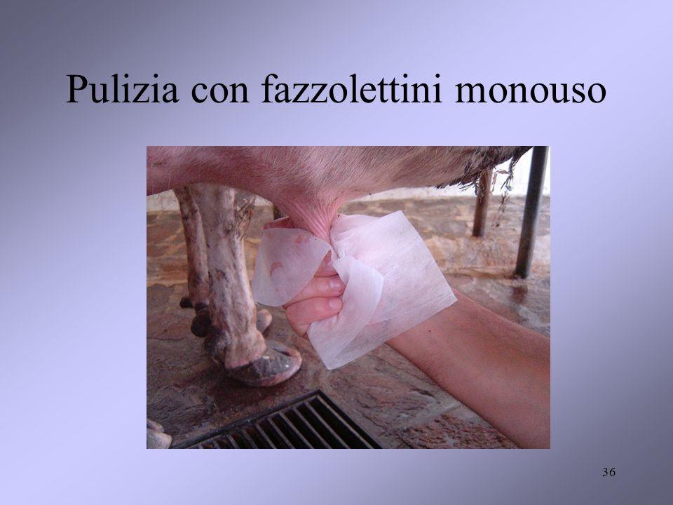 Pulizia con fazzolettini monouso 36