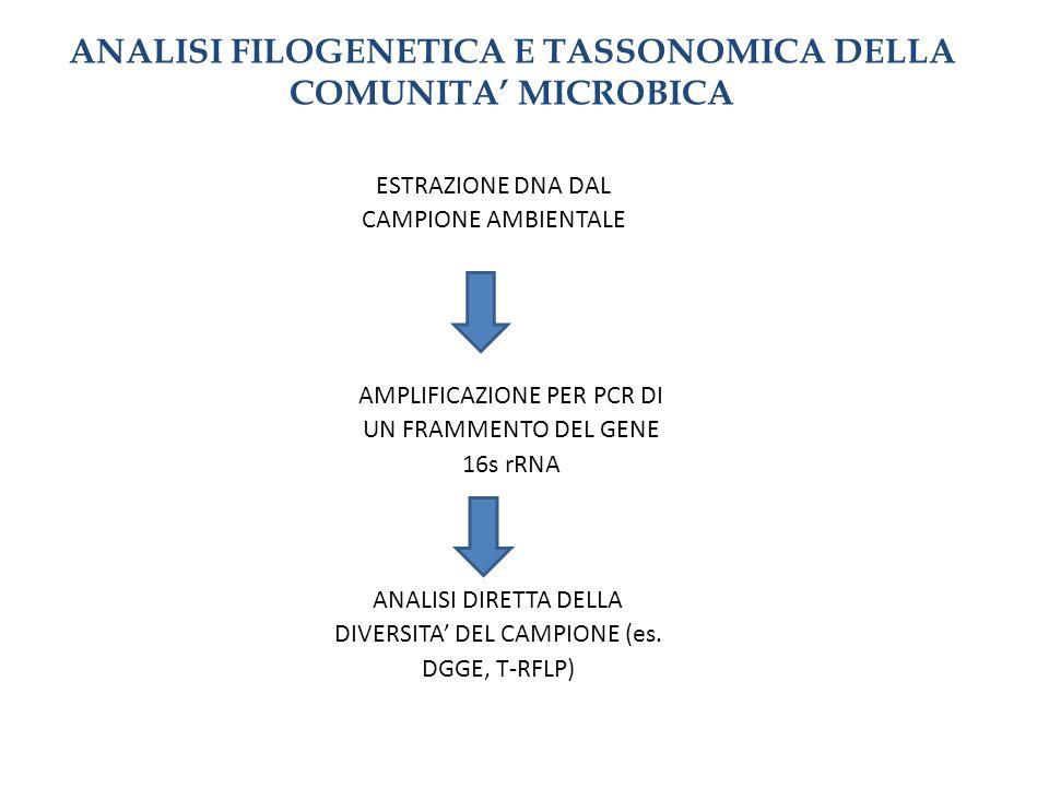 ANALISI FILOGENETICA E TASSONOMICA DELLA COMUNITA MICROBICA ESTRAZIONE DNA DAL CAMPIONE AMBIENTALE AMPLIFICAZIONE PER PCR DI UN FRAMMENTO DEL GENE 16s