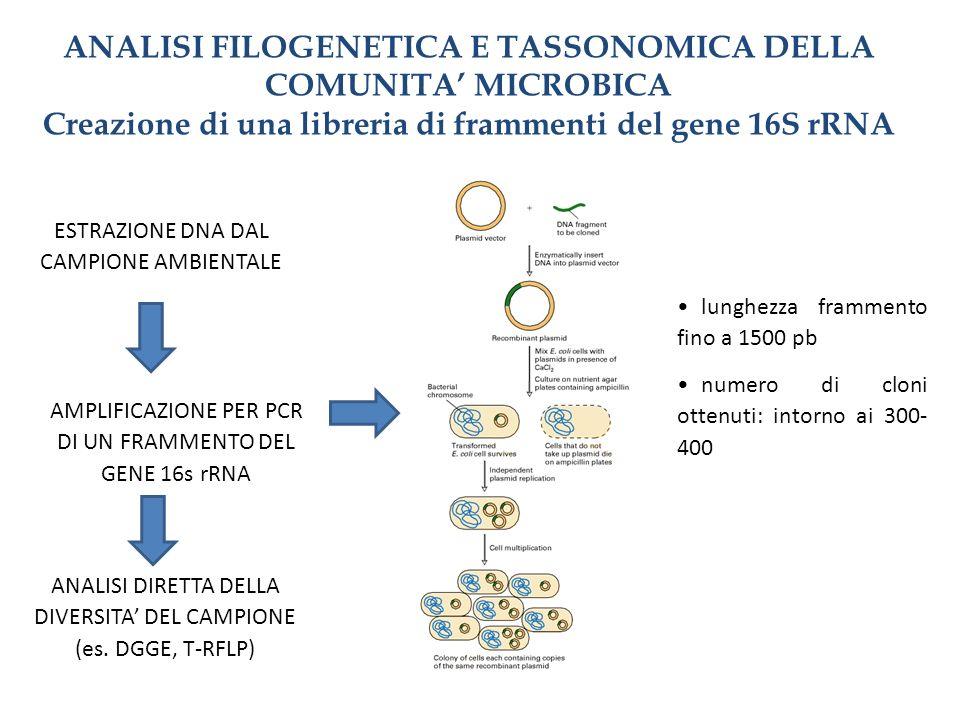 ANALISI FILOGENETICA E TASSONOMICA DELLA COMUNITA MICROBICA Creazione di una libreria di frammenti del gene 16S rRNA ESTRAZIONE DNA DAL CAMPIONE AMBIE