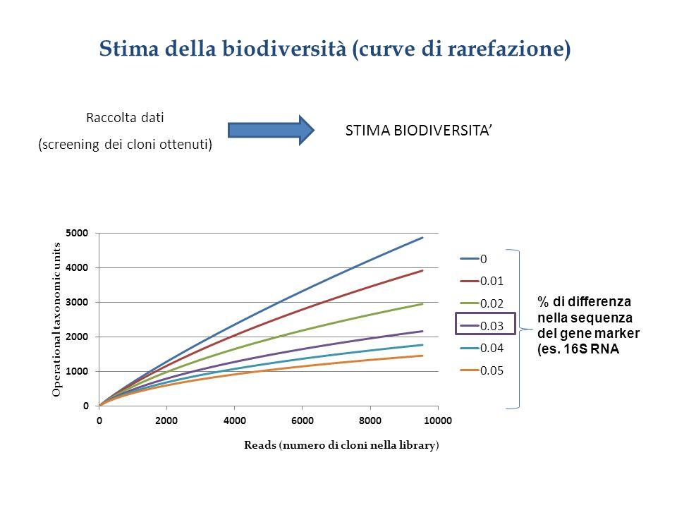 Stima della biodiversità (curve di rarefazione) Raccolta dati (screening dei cloni ottenuti) STIMA BIODIVERSITA % di differenza nella sequenza del gen