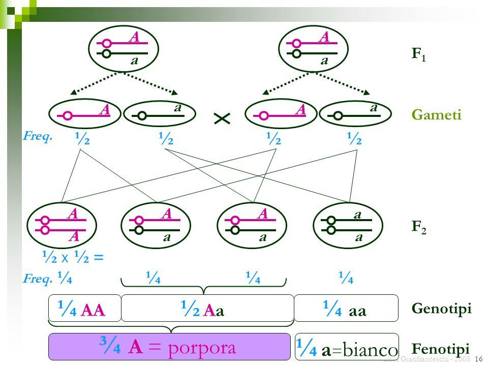 Luca Gianfranceschi - 2008 16 A a F1F1 F2F2 ¼ ½½½½ ½ x ½ = ¼¼¼ ¾ A = porpora Genotipi Fenotipi ¼ a = bianco Gameti A a A a A a A A A a A a a a ½ Aa½ A