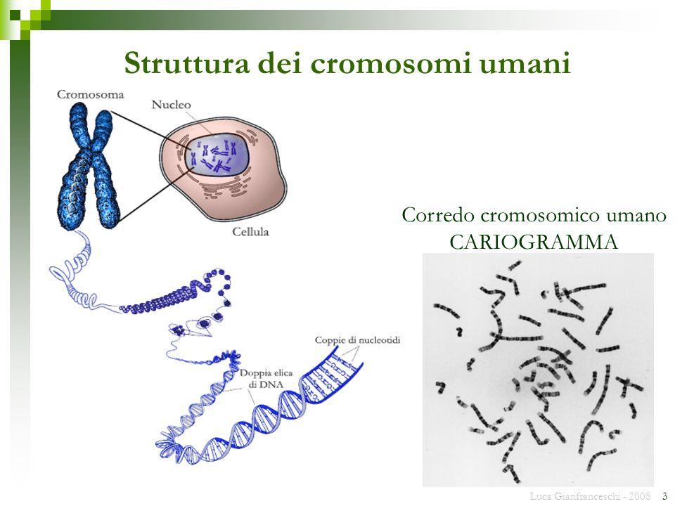 Luca Gianfranceschi - 2008 4 23 Coppie di cromosomi omologhi Il cariogramma umano