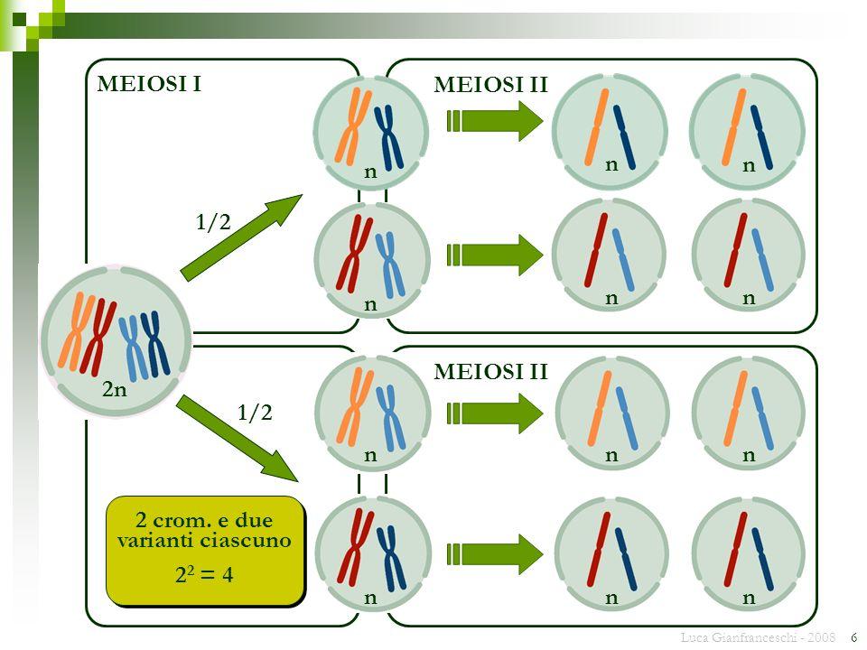 Luca Gianfranceschi - 2008 6 MEIOSI II n n n n 2 2 = 4 2 crom. e due varianti ciascuno 1/2 MEIOSI II n n nn MEIOSI I n n n n 2n