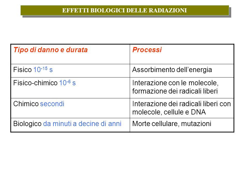 EFFETTI BIOLOGICI DELLE RADIAZIONI Tipo di danno e durataProcessi Fisico 10 -15 sAssorbimento dellenergia Fisico-chimico 10 -6 sInterazione con le mol