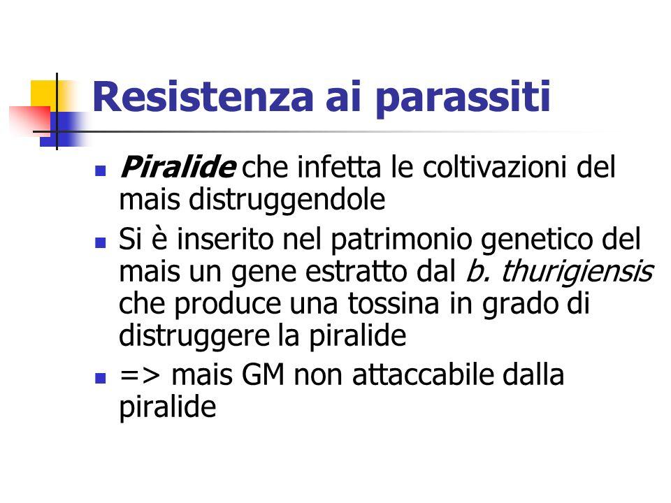 Resistenza ai parassiti Piralide che infetta le coltivazioni del mais distruggendole Si è inserito nel patrimonio genetico del mais un gene estratto dal b.