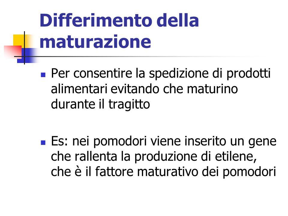 Differimento della maturazione Per consentire la spedizione di prodotti alimentari evitando che maturino durante il tragitto Es: nei pomodori viene inserito un gene che rallenta la produzione di etilene, che è il fattore maturativo dei pomodori