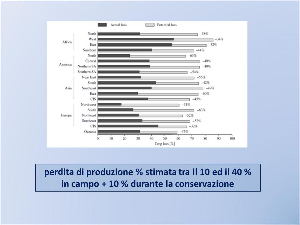 perdita di produzione % stimata tra il 10 ed il 40 % in campo + 10 % durante la conservazione