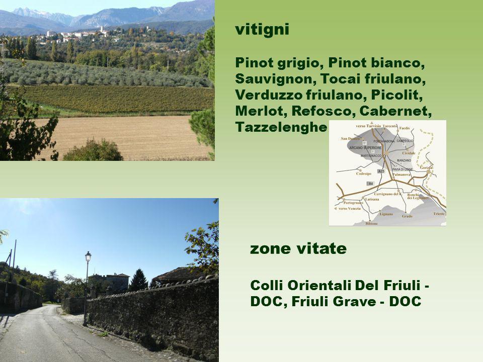 vitigni Pinot grigio, Pinot bianco, Sauvignon, Tocai friulano, Verduzzo friulano, Picolit, Merlot, Refosco, Cabernet, Tazzelenghe zone vitate Colli Orientali Del Friuli - DOC, Friuli Grave - DOC