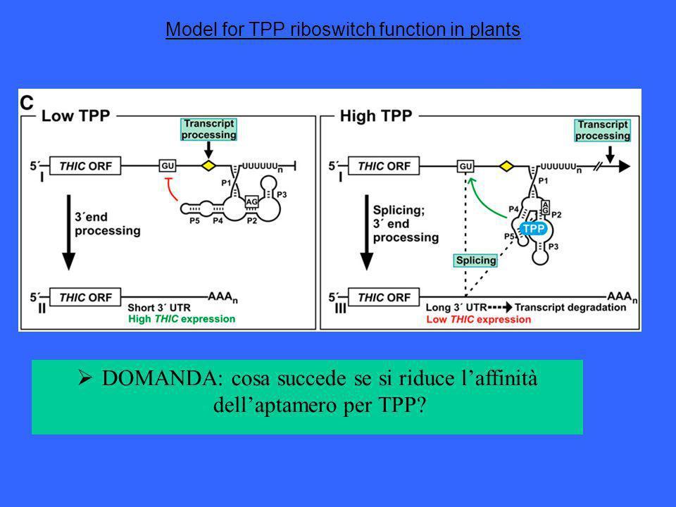 Model for TPP riboswitch function in plants DOMANDA: cosa succede se si riduce laffinità dellaptamero per TPP?