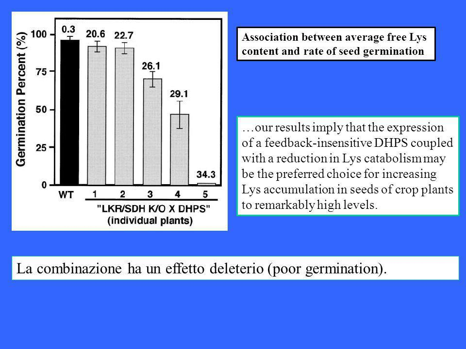 La combinazione ha un effetto deleterio (poor germination). Association between average free Lys content and rate of seed germination …our results imp