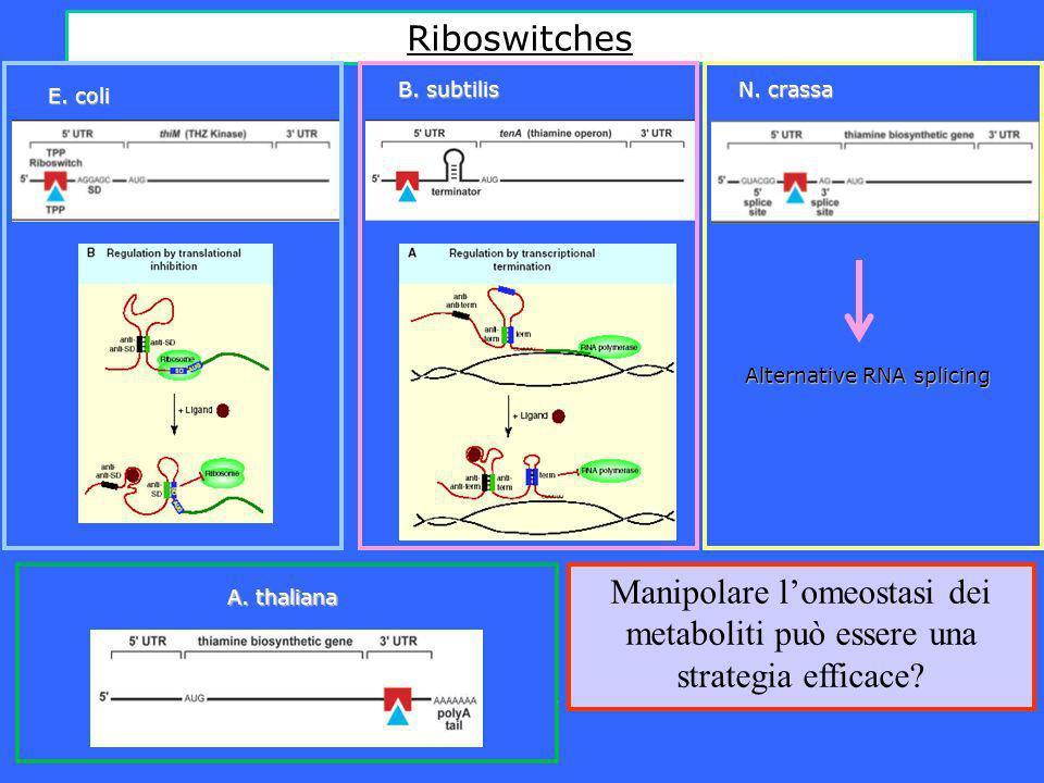 TPP aptameri sono presenti in numerose specie vegetali L80% dei nucleotidi, escludendo il dominio P3, sono conservati in tutti gli aptameri vegetali considerati AptamerovegetaleAptamerobatterico