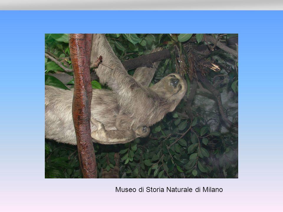 Museo di Storia Naturale di Milano