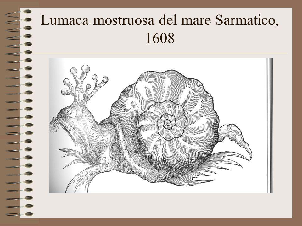 Lumaca mostruosa del mare Sarmatico, 1608