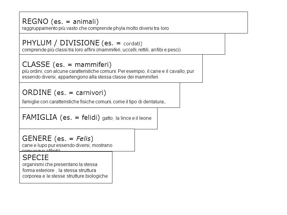 REGNO (es. = animali) raggruppamento più vasto che comprende phyla molto diversi tra loro PHYLUM / DIVISIONE (es. = cordati) comprende più classi tra