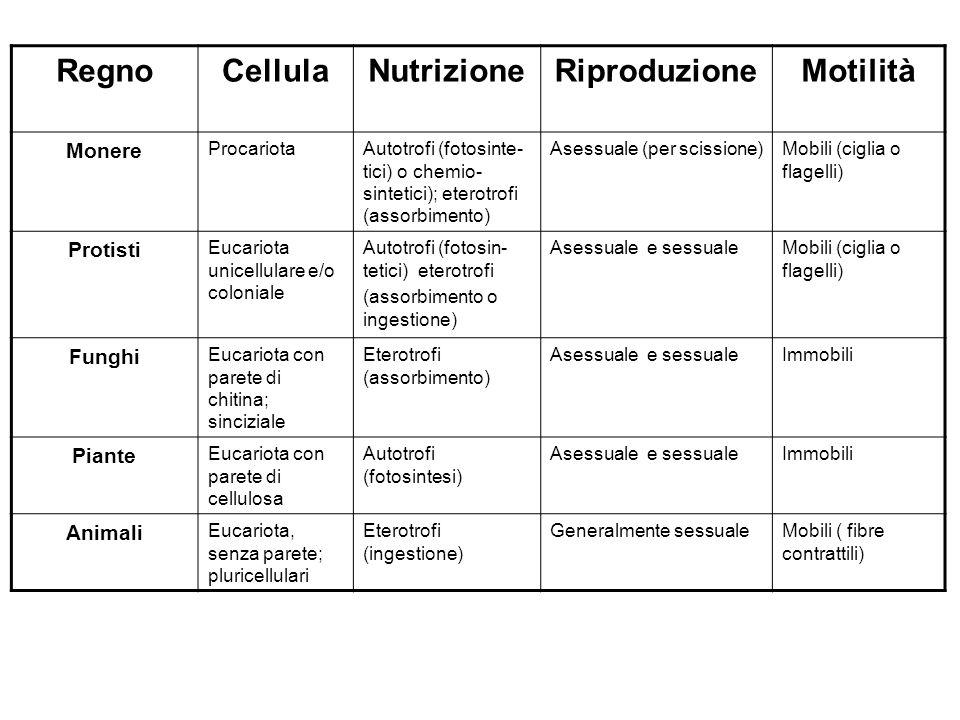 RegnoCellulaNutrizioneRiproduzioneMotilità Monere ProcariotaAutotrofi (fotosinte- tici) o chemio- sintetici); eterotrofi (assorbimento) Asessuale (per