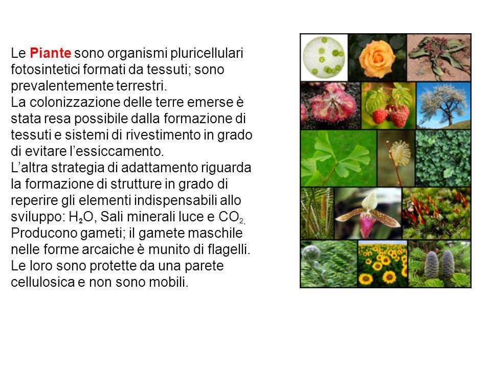 Le Piante sono organismi pluricellulari fotosintetici formati da tessuti; sono prevalentemente terrestri. La colonizzazione delle terre emerse è stata