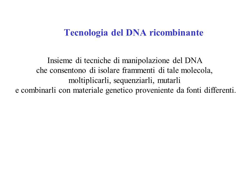 Tecnologia del DNA ricombinante Insieme di tecniche di manipolazione del DNA che consentono di isolare frammenti di tale molecola, moltiplicarli, sequenziarli, mutarli e combinarli con materiale genetico proveniente da fonti differenti.