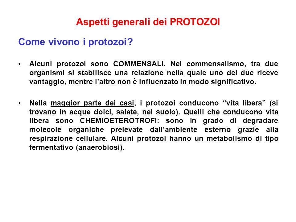 Aspetti generali dei PROTOZOI Come vivono i protozoi? Alcuni protozoi sono COMMENSALI. Nel commensalismo, tra due organismi si stabilisce una relazion