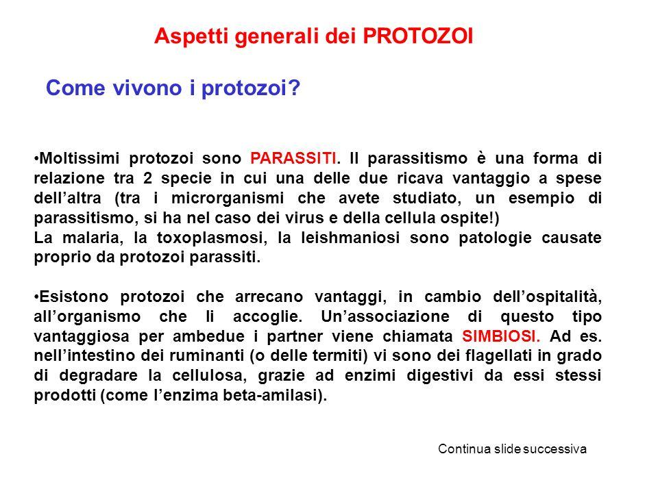Aspetti generali dei PROTOZOI Come vivono i protozoi? Moltissimi protozoi sono PARASSITI. Il parassitismo è una forma di relazione tra 2 specie in cui