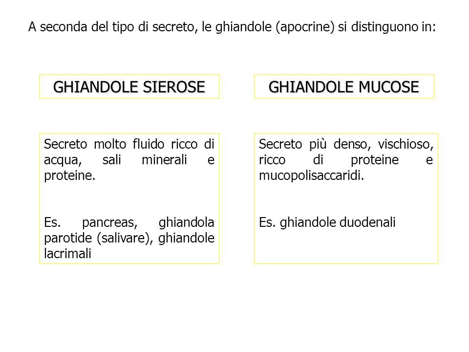Secreto più denso, vischioso, ricco di proteine e mucopolisaccaridi. Es. ghiandole duodenali GHIANDOLE MUCOSE GHIANDOLE SIEROSE A seconda del tipo di