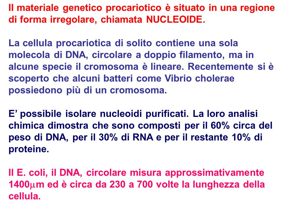 II materiale genetico procariotico è situato in una regione di forma irregolare, chiamata NUCLEOIDE. La cellula procariotica di solito contiene una so