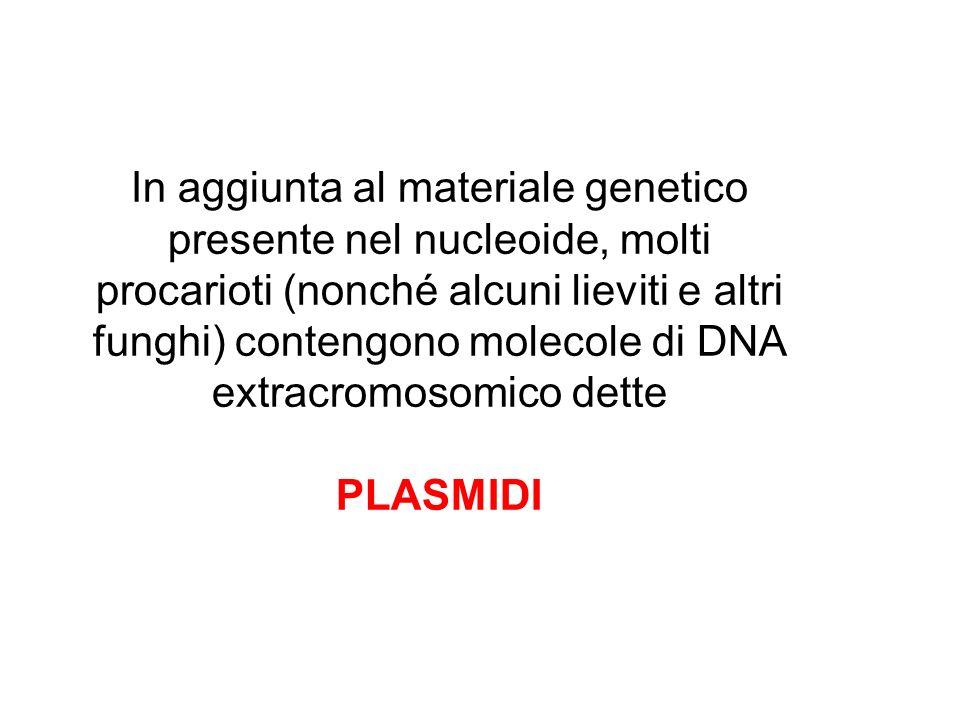 In aggiunta al materiale genetico presente nel nucleoide, molti procarioti (nonché alcuni lieviti e altri funghi) contengono molecole di DNA extracrom