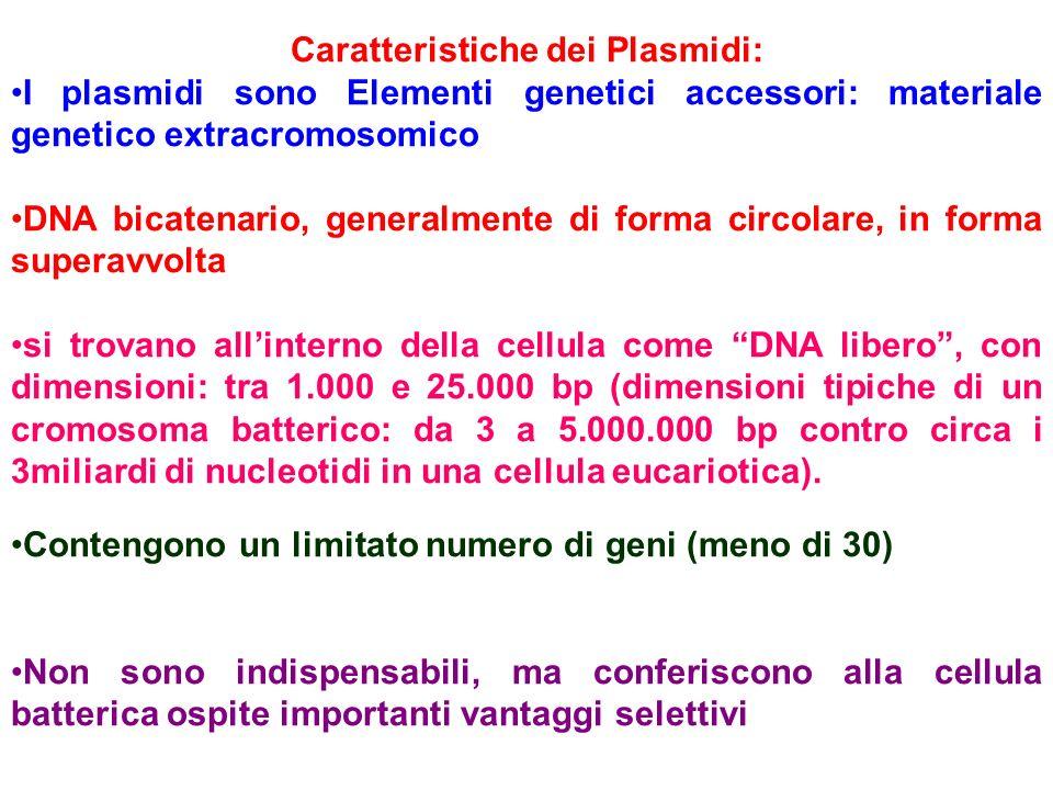 Caratteristiche dei Plasmidi: I plasmidi sono Elementi genetici accessori: materiale genetico extracromosomico DNA bicatenario, generalmente di forma