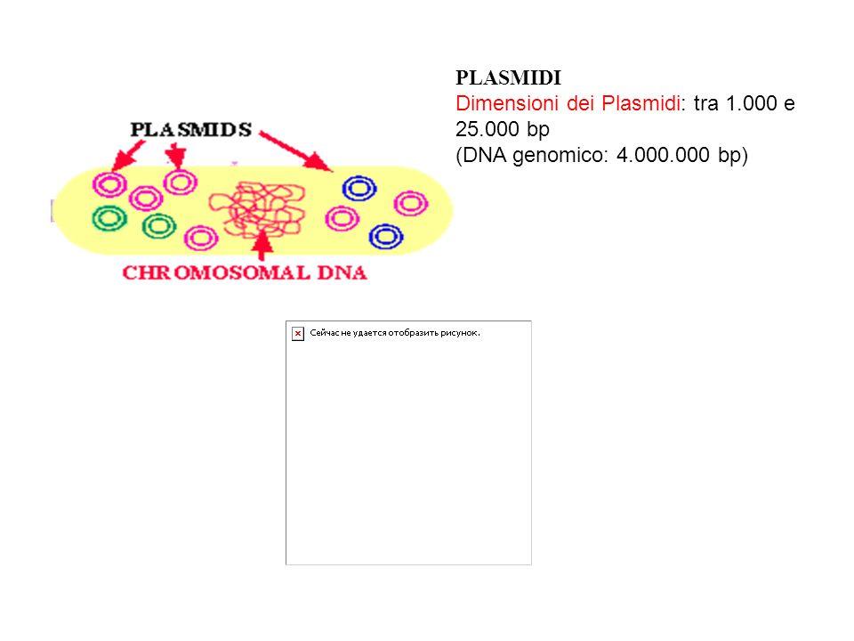 PLASMIDI Dimensioni dei Plasmidi: tra 1.000 e 25.000 bp (DNA genomico: 4.000.000 bp)