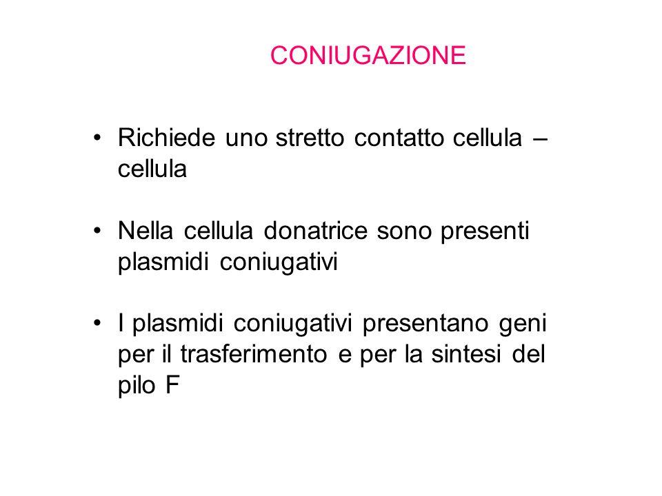Richiede uno stretto contatto cellula – cellula Nella cellula donatrice sono presenti plasmidi coniugativi I plasmidi coniugativi presentano geni per