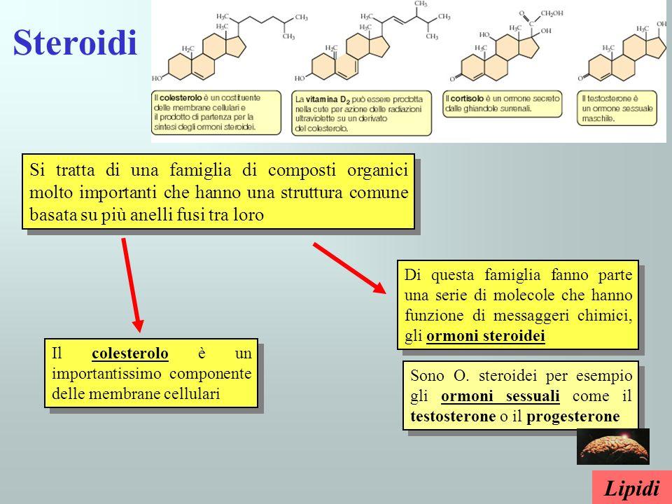 Steroidi Si tratta di una famiglia di composti organici molto importanti che hanno una struttura comune basata su più anelli fusi tra loro Il colester