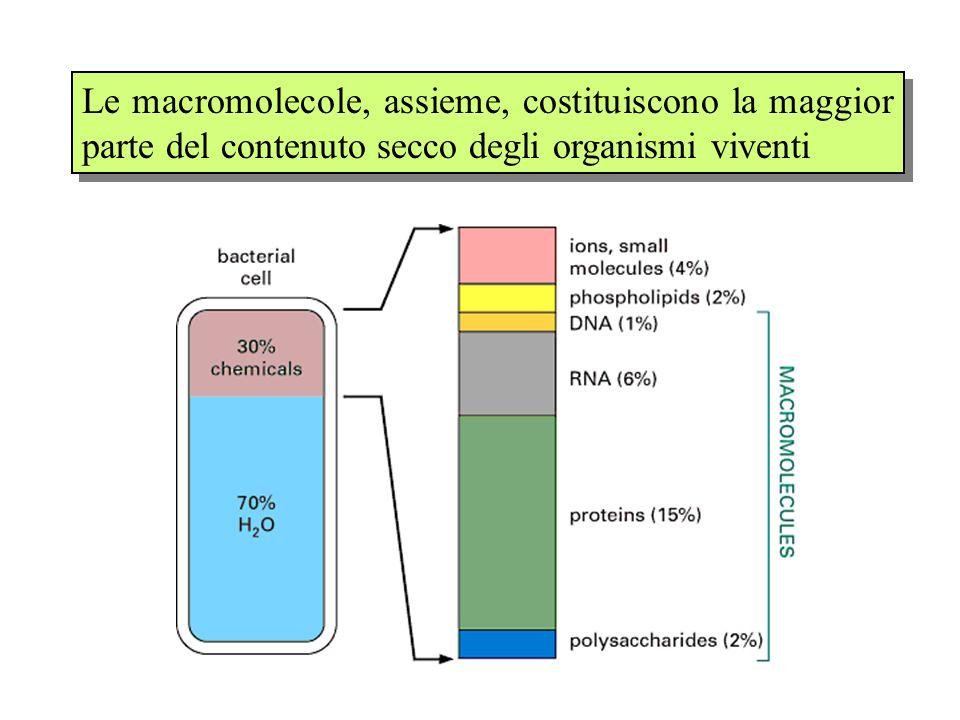 La caratteristica comune a tutte le macromolecole è di essere costituite da strutture complesse (polimeri) ottenute dallassemblaggio di unità più piccole (monomeri).