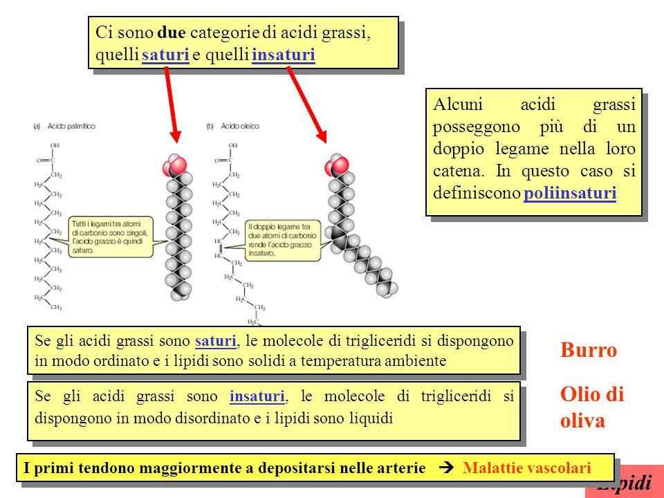 Fosfolipidi I fosfolipidi hanno una struttura affine a quella dei trigliceridi dove al una delle catene di acidi grassi è sostituita da un gruppo fosforico Gruppo fosforico Fortemente polare Affinità per lH 2 O Acido grasso Glicerolo Fortemente apolare Affinità per i lipidi Lipidi