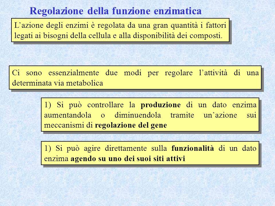 Regolazione della funzione enzimatica Lazione degli enzimi è regolata da una gran quantità i fattori legati ai bisogni della cellula e alla disponibil