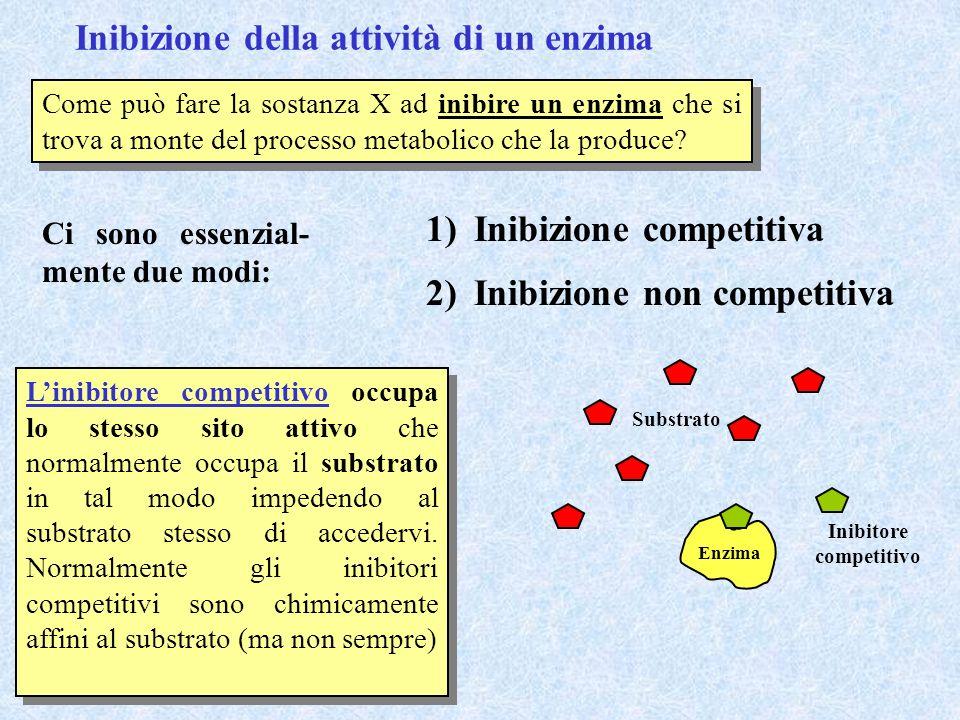 Inibizione della attività di un enzima Come può fare la sostanza X ad inibire un enzima che si trova a monte del processo metabolico che la produce? C