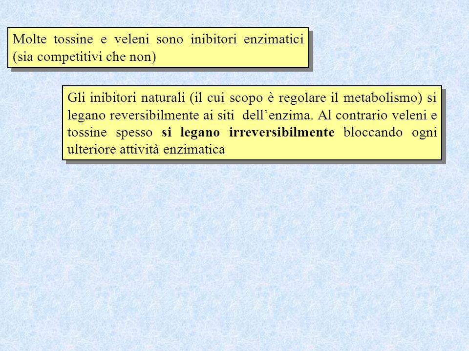 Molte tossine e veleni sono inibitori enzimatici (sia competitivi che non) Gli inibitori naturali (il cui scopo è regolare il metabolismo) si legano r
